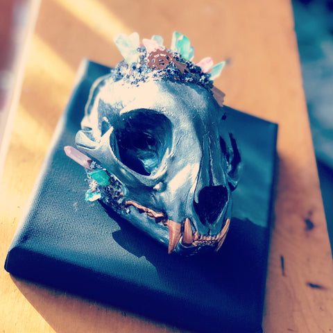 Bobcat Skull, Crystallized Skull, Skull Art, Gothic Decor, Oddities and Curiosities