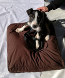Perfect Puppy Pillow / Small Dog Bed / Cat Cushion - Non-toxic, Handmade in Australia - Grade 1 Kapok Fibre - fr.incl