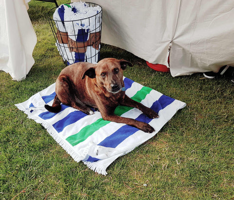 dog, beach towel, market