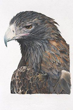 Wildlife Prints in Colour Pencil