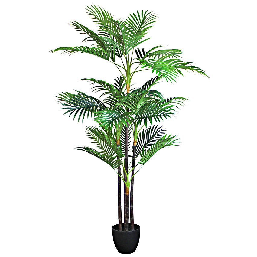 Cane Palm with Pot 150cm