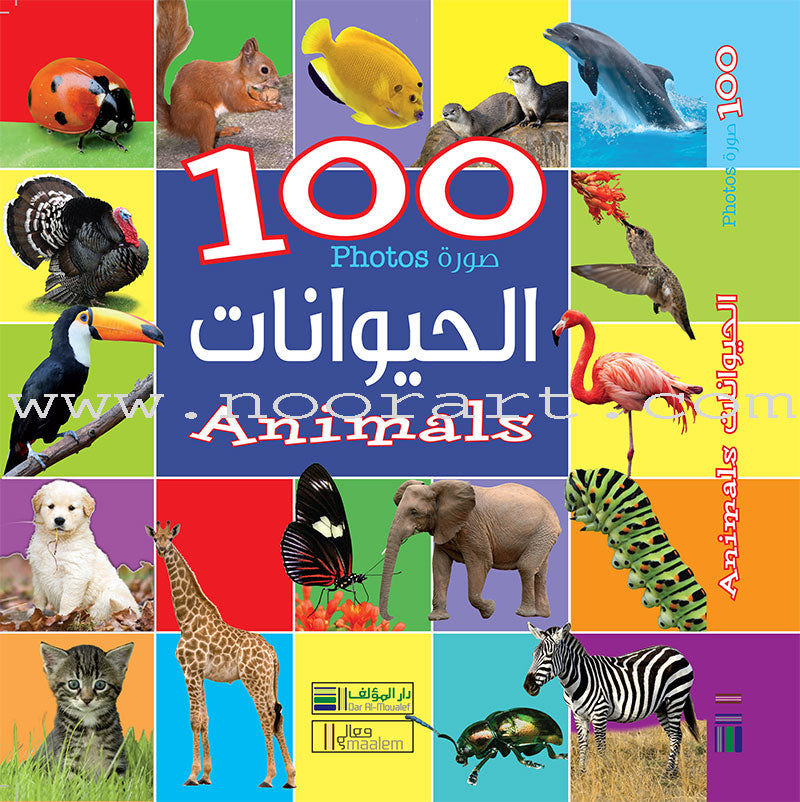 100 Photos of Animals