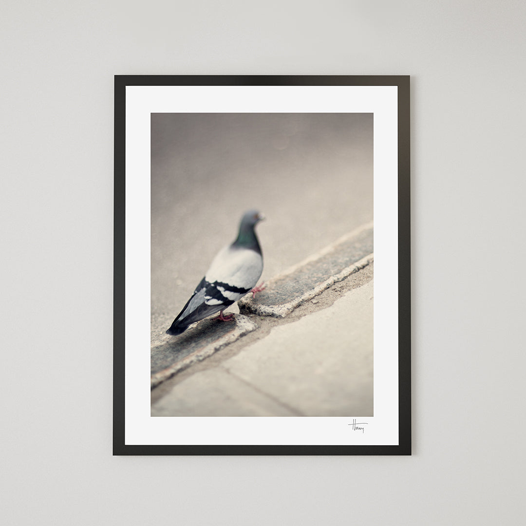 Walking pigeon