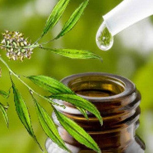 Tea Tree Oil - A Doctor's Report on Nature's All-Purpose Cleanser