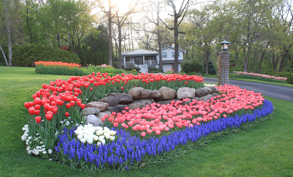 Garden Bulbs: The Easy Way to Fill Your Garden with Color