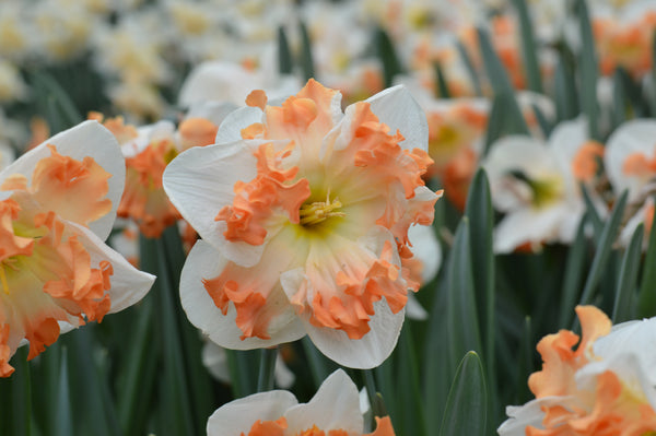 When Is it Too Late To Plant Bulbs?