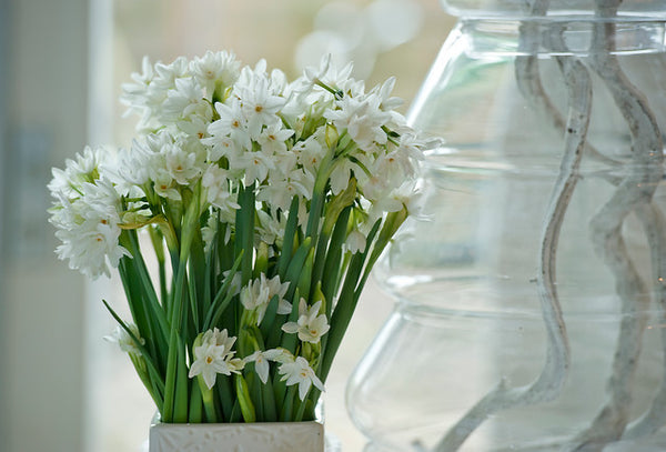 Paperwhites – Fun, Elegant and Easy