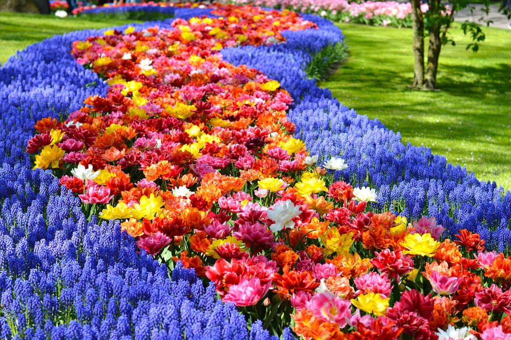 Keukenhof Gardens 2018: A Place for Inspiration