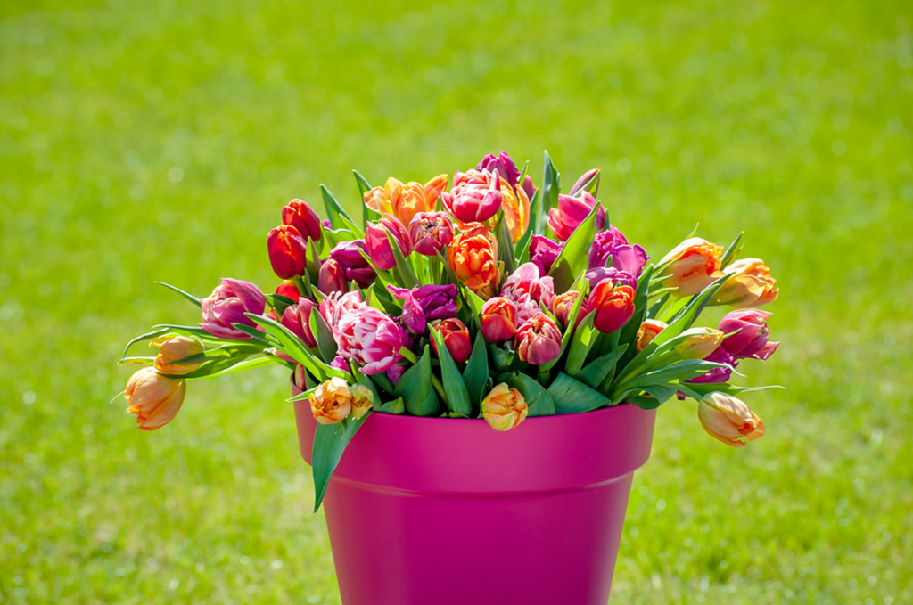 Dutch Bulbs: The Easy Way to a Colorful Garden