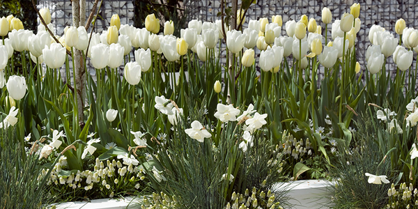 How to Grow a White Spring Garden