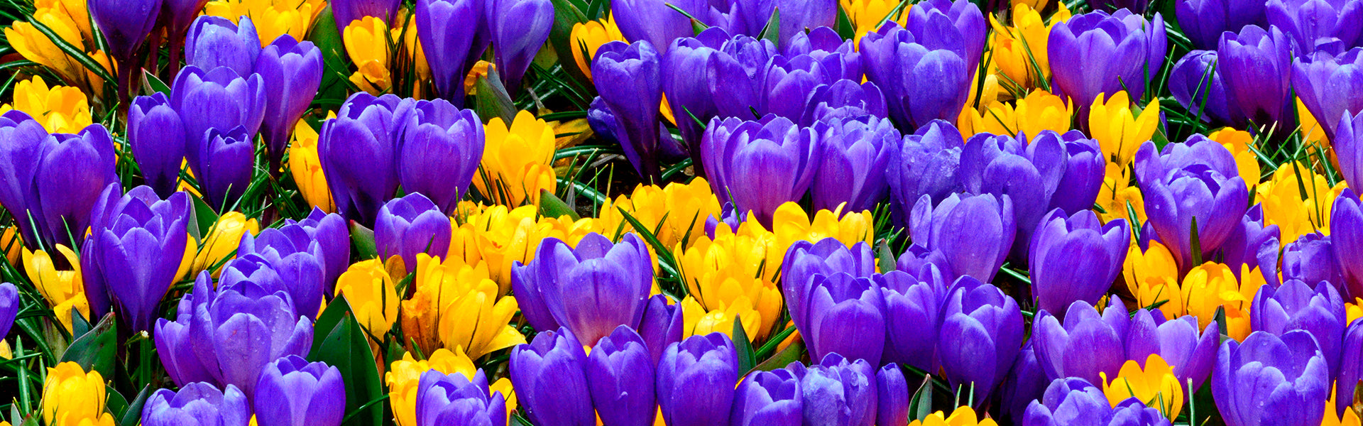 Brand New Flower Bulb Collections