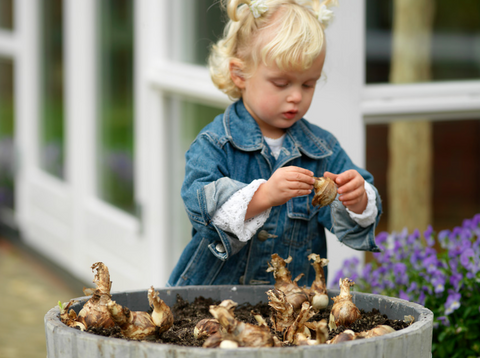 Planting Flower Bulbs in the Fall for Spring Pleasure