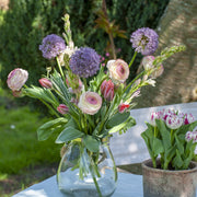 Allium Gladiator - Great as Cut Flower or For Dried Flower Arrangements