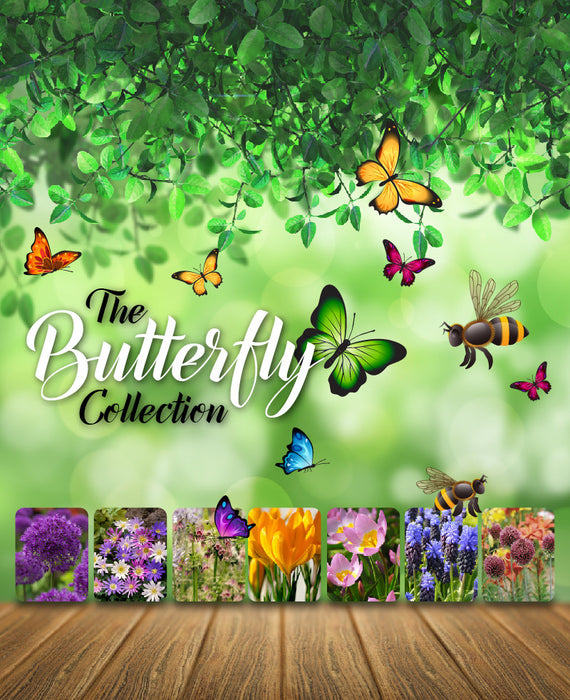 Flower bulbs for butterflies and bees