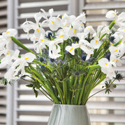 Dutch Iris White Excelsior on the vase