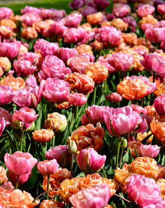 Tulip Peony Party Collection