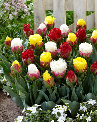 Tulip Ice Cream Collection - White, Pink, Red, Yellow, Green flowers