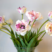 Tulip Jonquieres - French Tulip - Double Peony Pink - Great Cut Flower