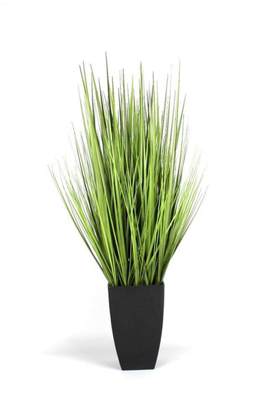 Decorative Indoor Grasses in Black Pot