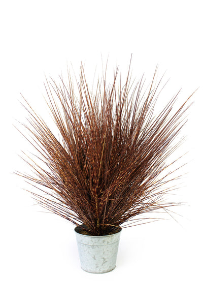 Decorative Grasses Zebra Brown