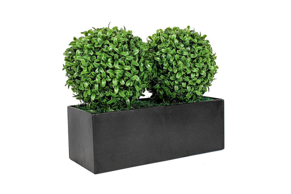 Boxwood Double Balls