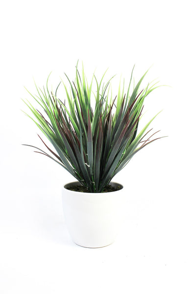 Decorative Indoor Grasses in White Ceramic Pot (Two Toned)