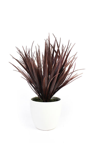Indoor Decorative Grasses