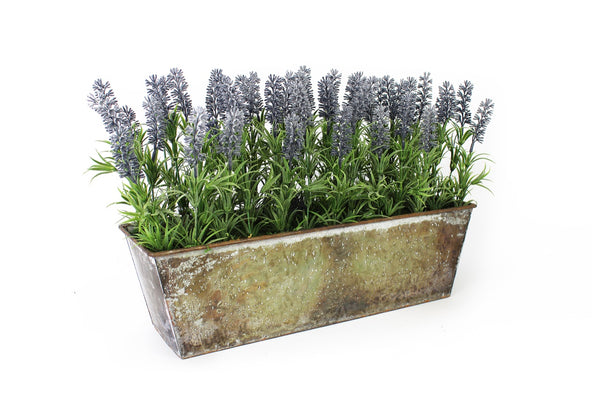 Lavender in large rustic planter