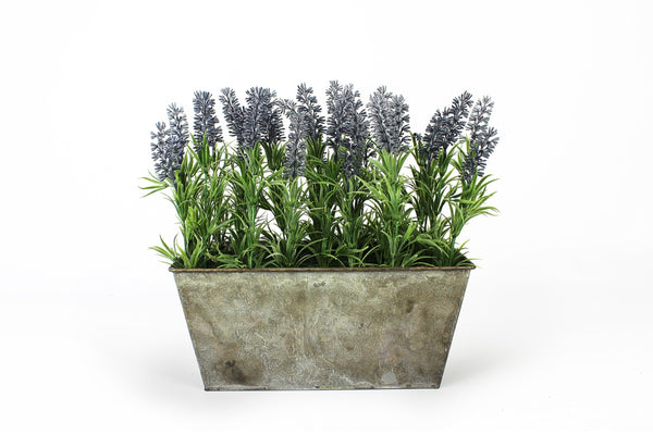 Lavender in small rustic planter