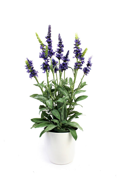 Lavender in ceramic pot