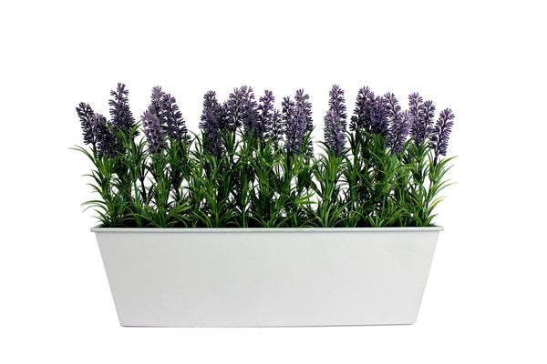 Lavender in large white tin planter