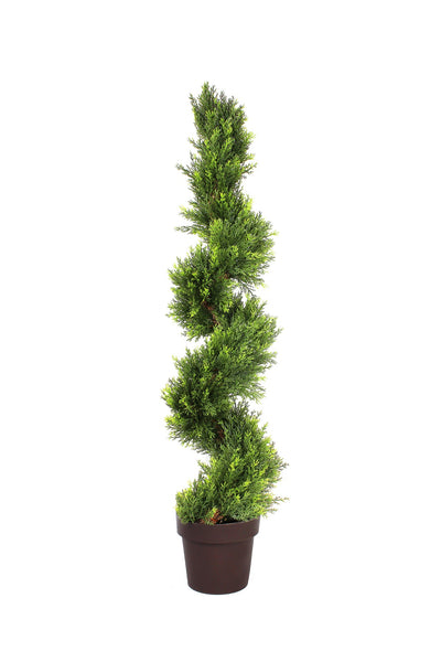 Spiral Boxwood Cedar Tree