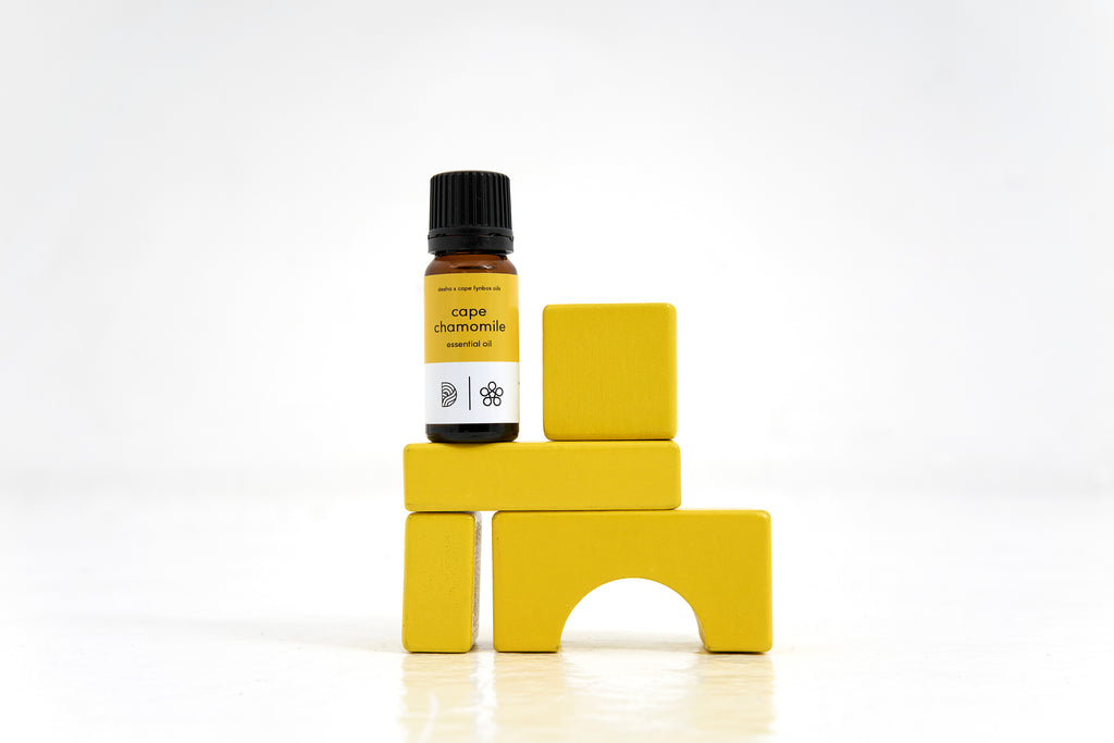 cape chamomile essential oil
