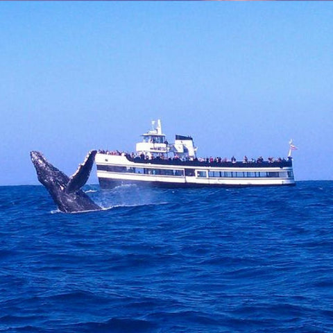 Whale Watching Tour - 3 1/2 Hour Expedition