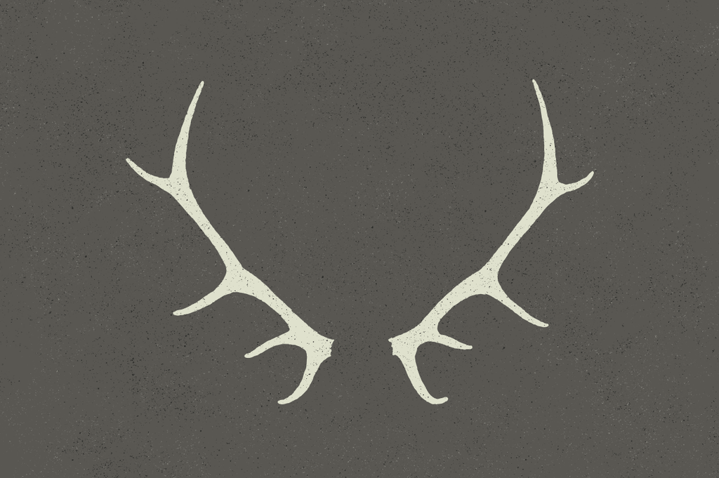 Deer rack vector illustration