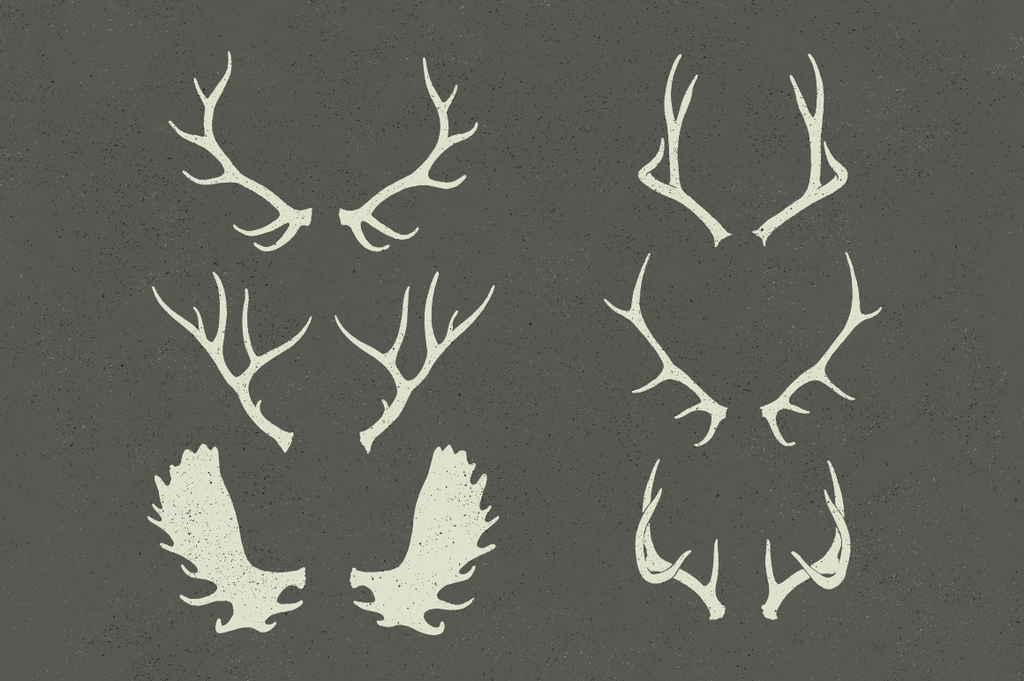 Wildlife antlers illustrations