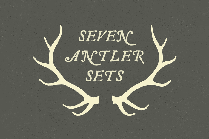 Deer Antler Illustration Vectors