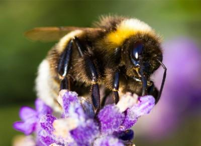 Love bees - especially the wild ones!