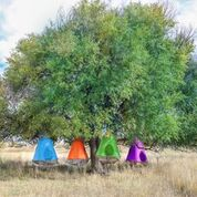 The Irresistible features of Gigatent and Treepod Tents