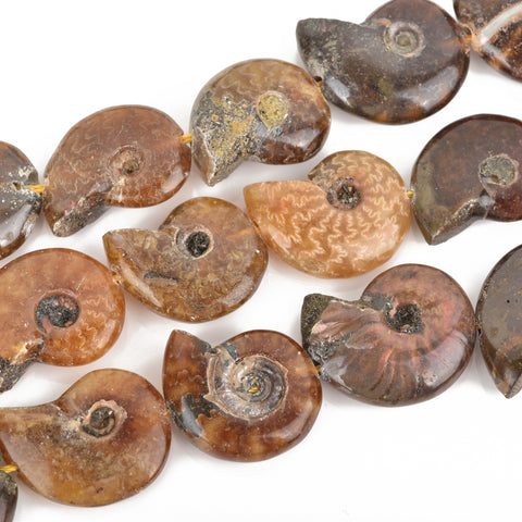 18mm-22mm Natural AMMONITE FOSSIL Beads, Natural Gemstone Beads, 21-24 beads, gaf0010