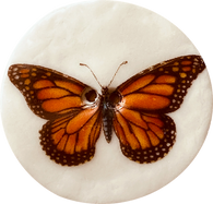 Monarch Butterfly, Large Handmade Porcelain Button 1-1/2""