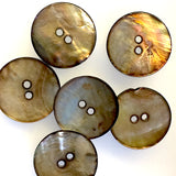 "Gold-Bronze 1"" Shell Button, LAST set of SIX"