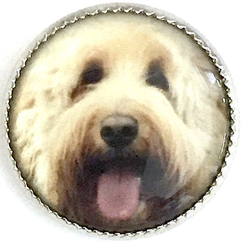 SALE Labradoodle Dog Crystal Dome picture button 3/4""
