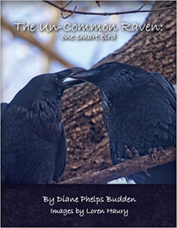 The Uncommon Raven: One Smart Bird