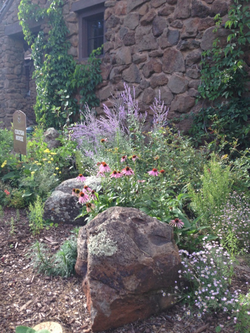 Horticulture Tour: Colton House, Coyote Range - August 10, 2019