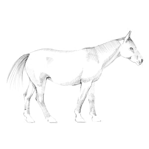 How to Draw a Horse - Step 3