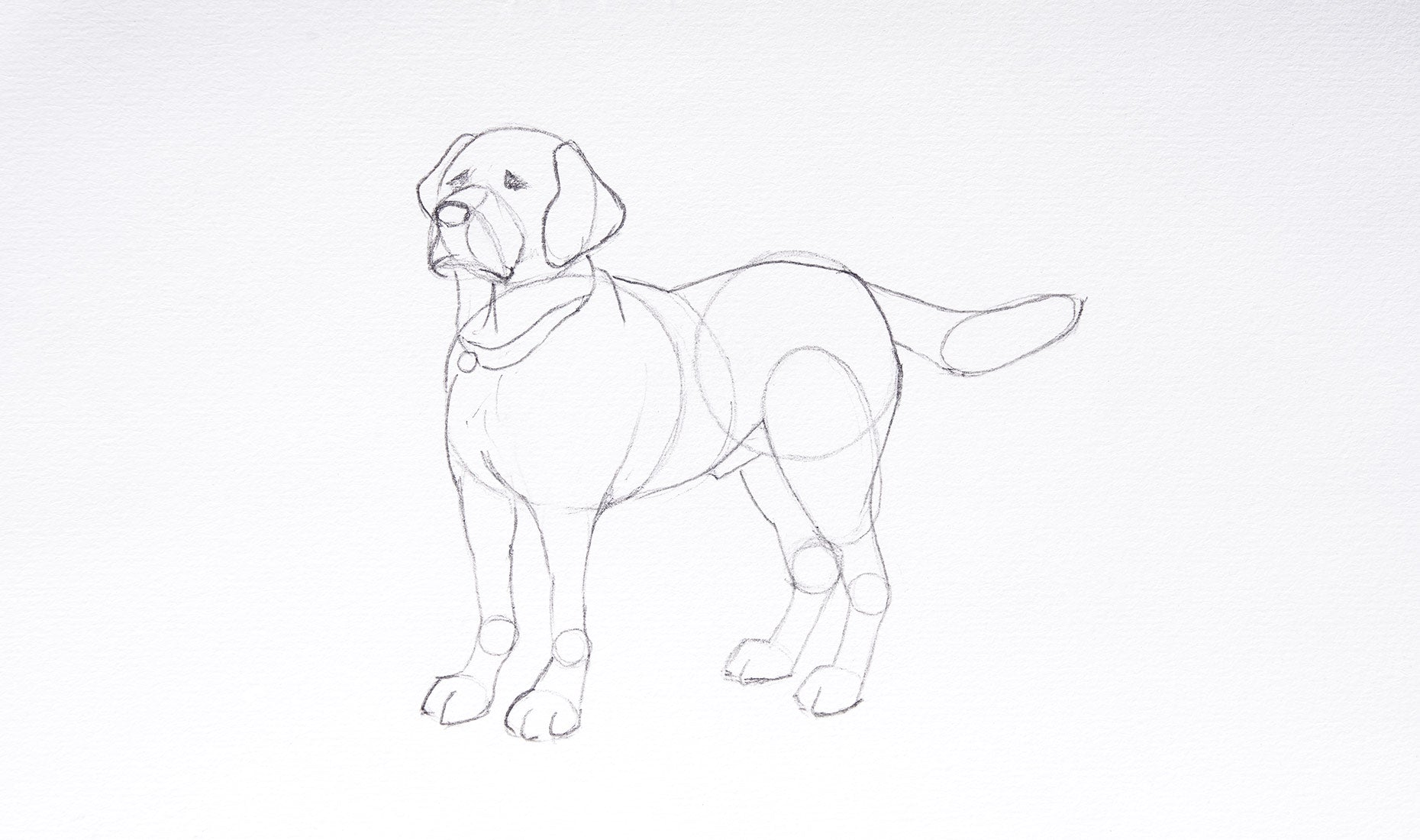draw a dog step 3