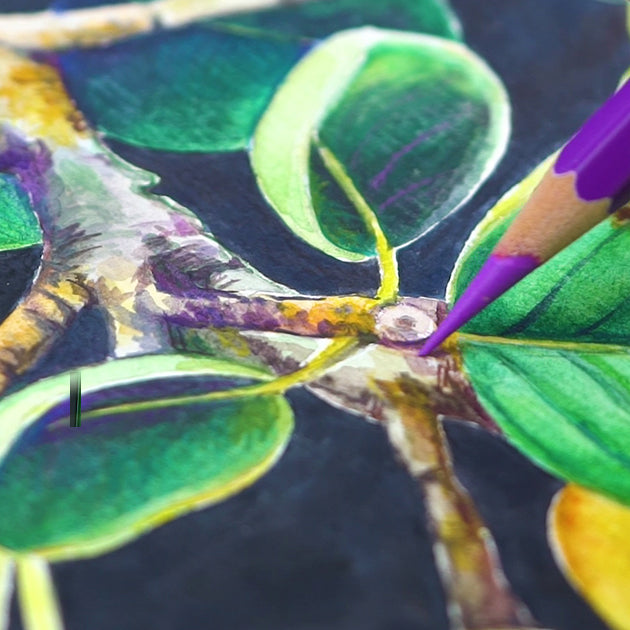 Step 5: Adding More with Watercolor Pencils