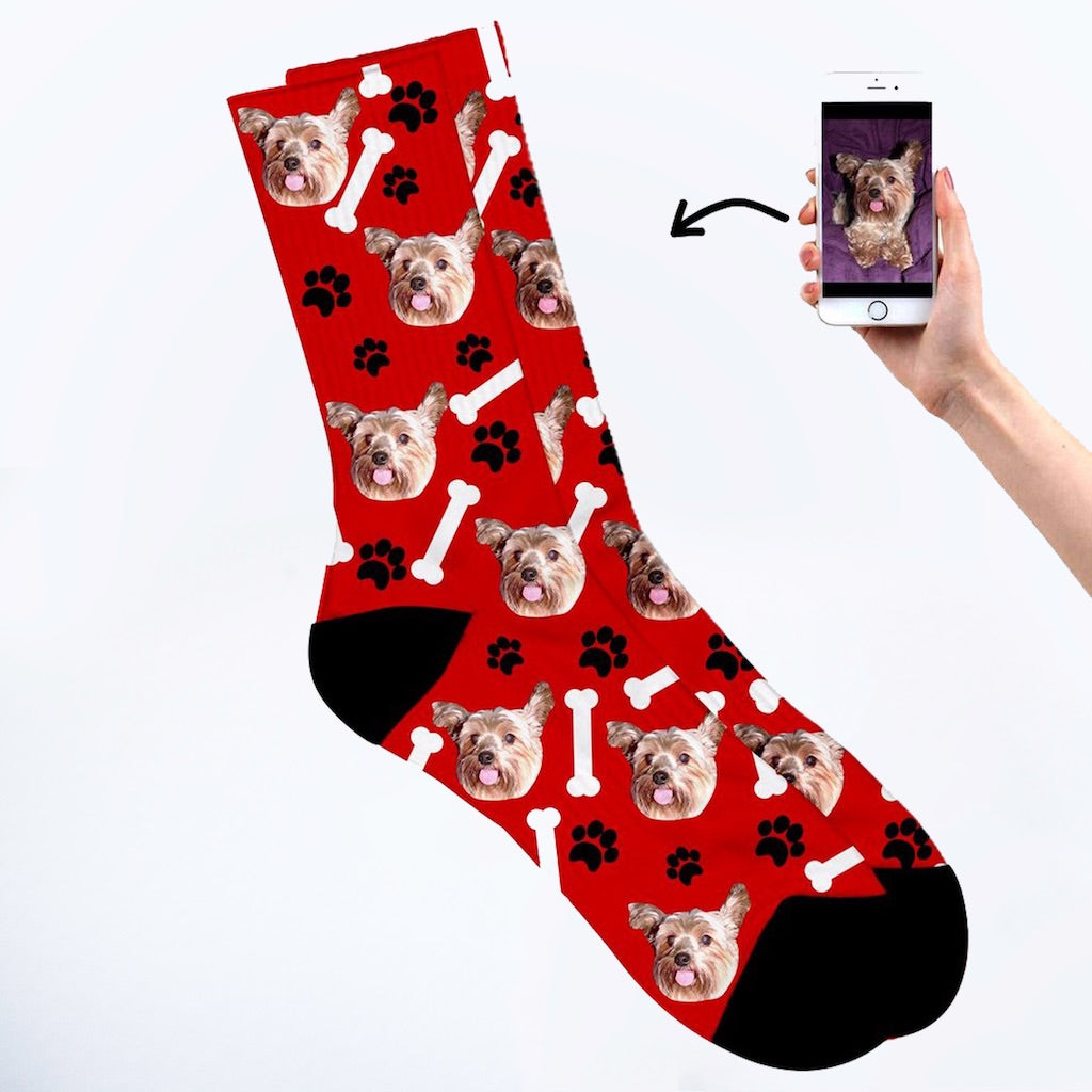 Dog on socks red