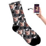 Dog on socks grey